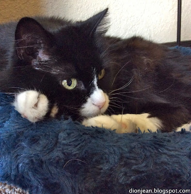 Maggie the senior cat is recovering from the loss of her pack mate