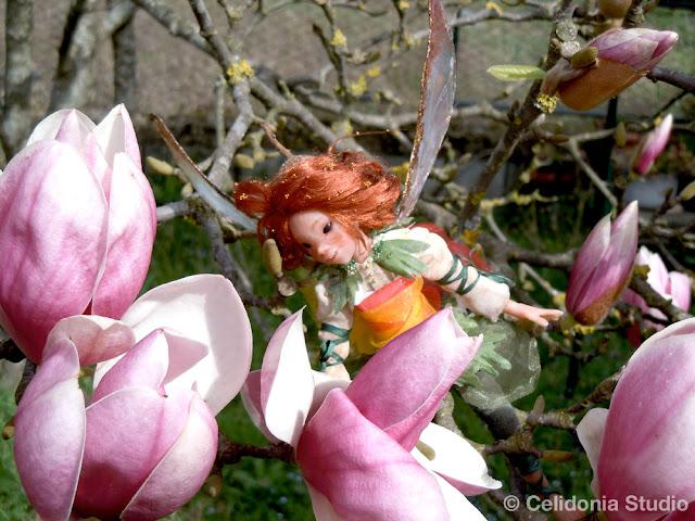 fata e magnolia