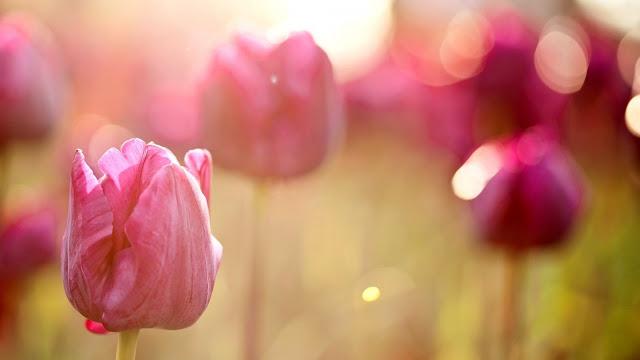 Tải hình nền hoa xuân