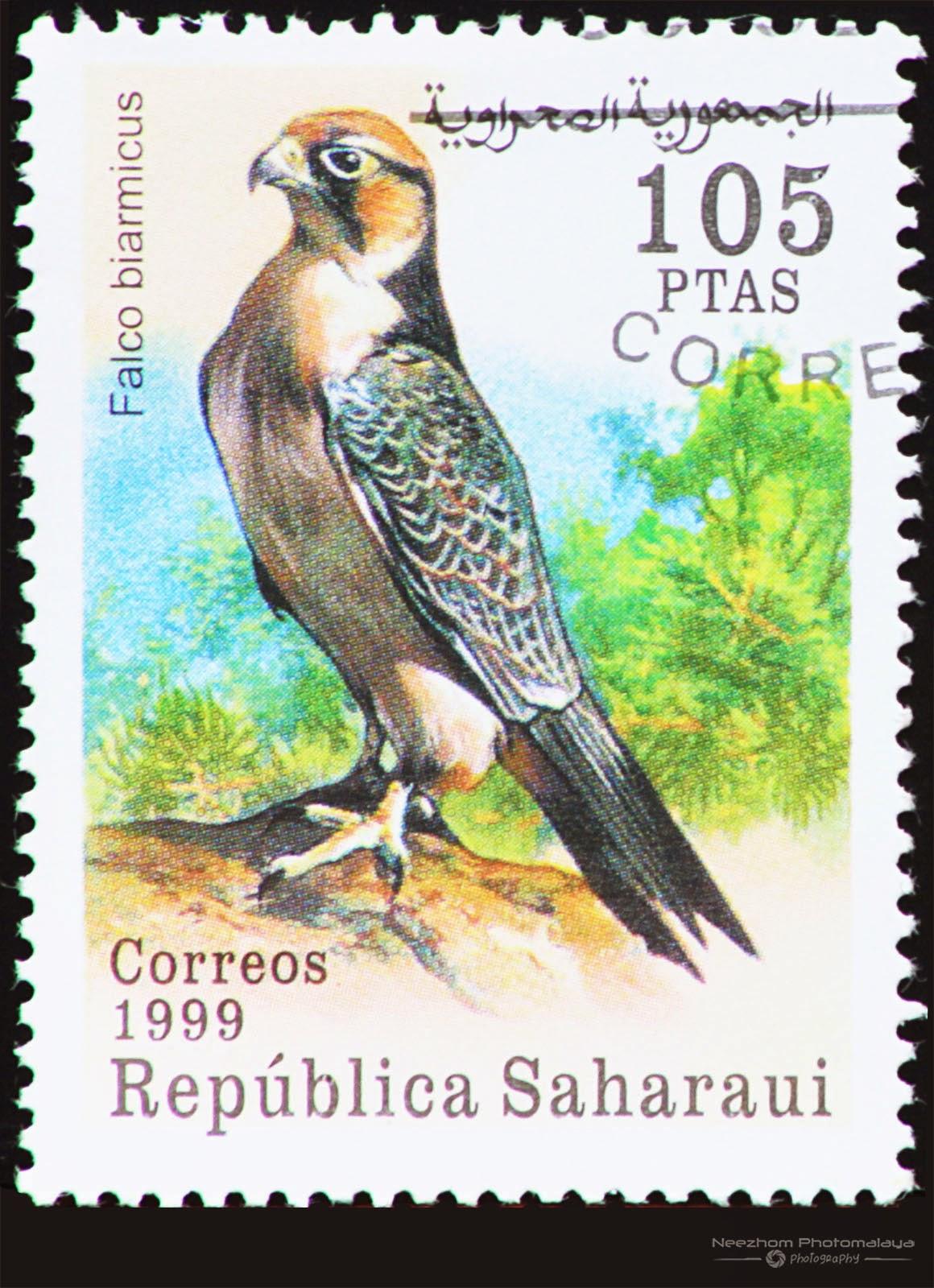 Western Sahara 1999 Birds of Prey stamp - Lanner Falcon (Falco biarmicus) 105 ptas