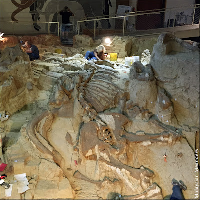 paleontology, mammoth fossile, Hot Springs, South Dakota