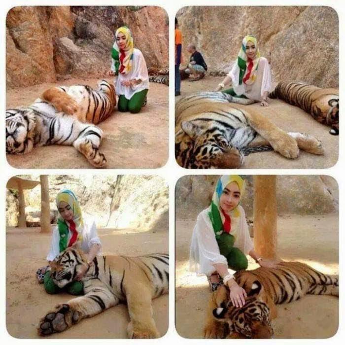 Gambar Aksi Gadis Bertudung Belai Harimau Jadi Viral