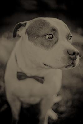 foto sepia de perrito con corbata michi