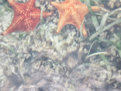 The starfish in the crystal clear waters
