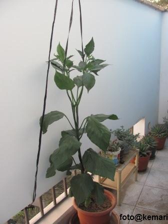 Jardines y huertos a tu alcance: Floración y formación de frutos del ...