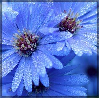 2 flori cu roua pe tample!