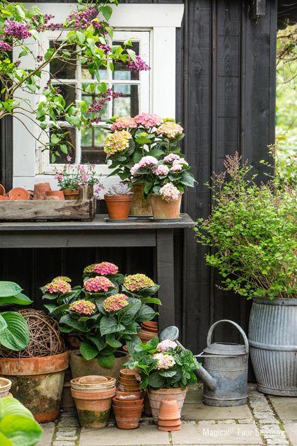 http://www.tuinieren.nl/tuinnieuws/planten/4-seizoenen-mooi.html