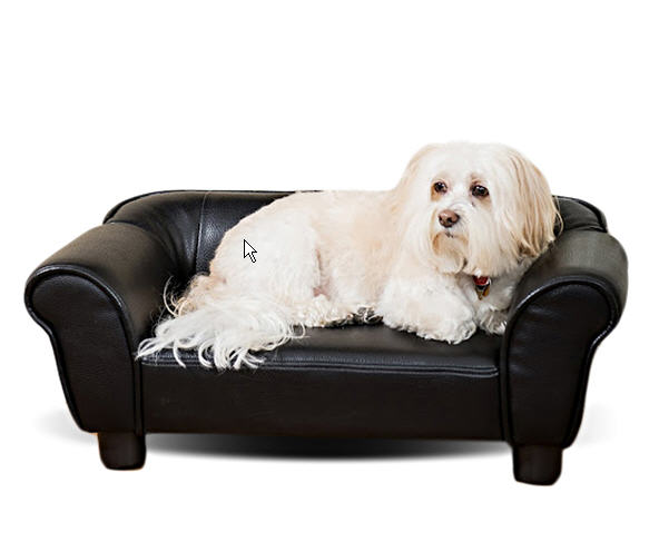 Calling All Dogs Leather Dog Sofa Is Just Right If Your Likes To Retire The Study For Brandy And Cigars After Dinner