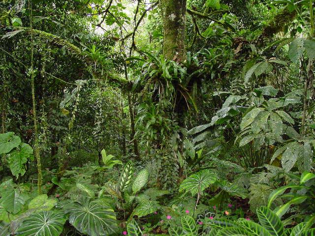 las region tropicales de mexico: