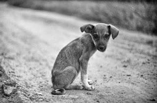 Фотография бездомного щенка