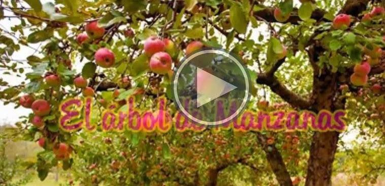 Reflexión: El arbol de manzanas