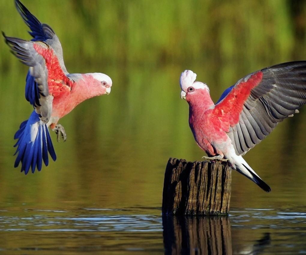 water birds bing wallpaper - photo #3