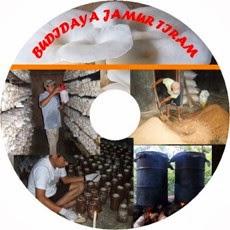 V-CD Budidaya Jamur tiram