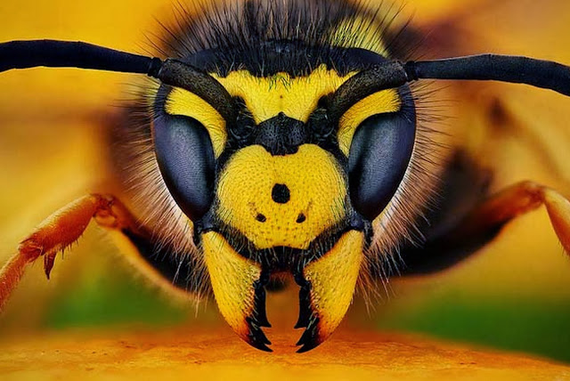 fotos-de-insectos