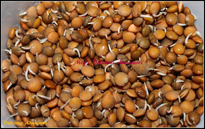 Sprouted Masoor Beans