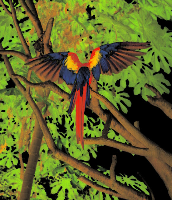 Macaw Spreading Wings