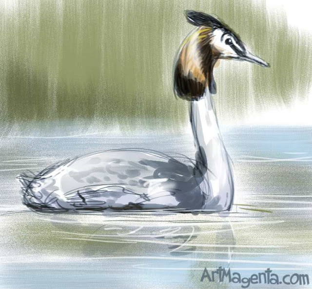 Great Crested Grebe is a bird painting by ArtMagenta.com