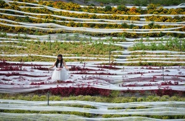 Unik, Pasangan Ini Menikah Sambil Pecahkan Rekor Gaun Pengantin Terpanjang