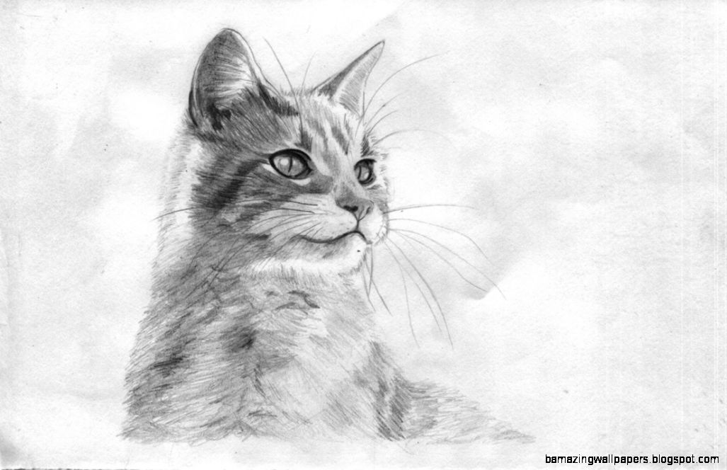 Easy Cat Drawings In Pencil | Amazing Wallpapers