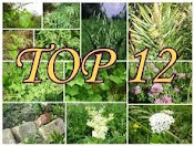 2013 sezona augu pasaulē ar TOP 12