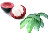 obat tradisional kanker payudara