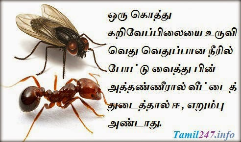 House Fly and Ant control tips in tamil