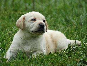 Mascotas para Niños, Perros
