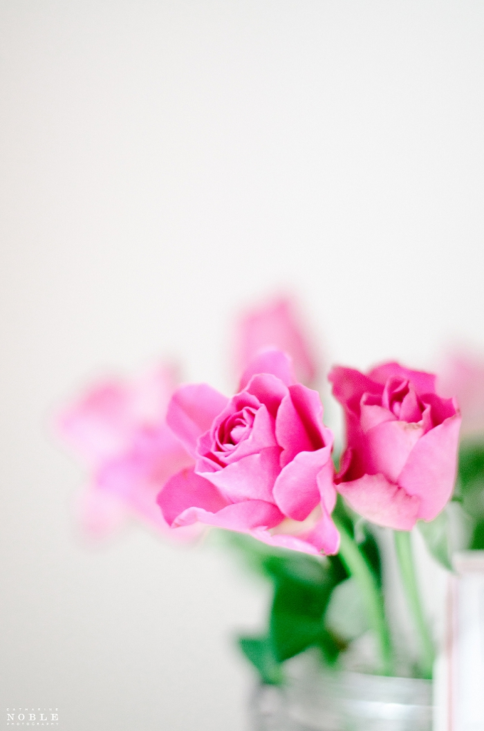 fine art photography film pink roses