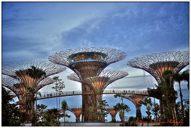 Singapore+Gardens+by+the+Bay+super+trees