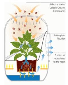 Sistema vivo de purificaci n de aire plantas for Plantas de purificacion