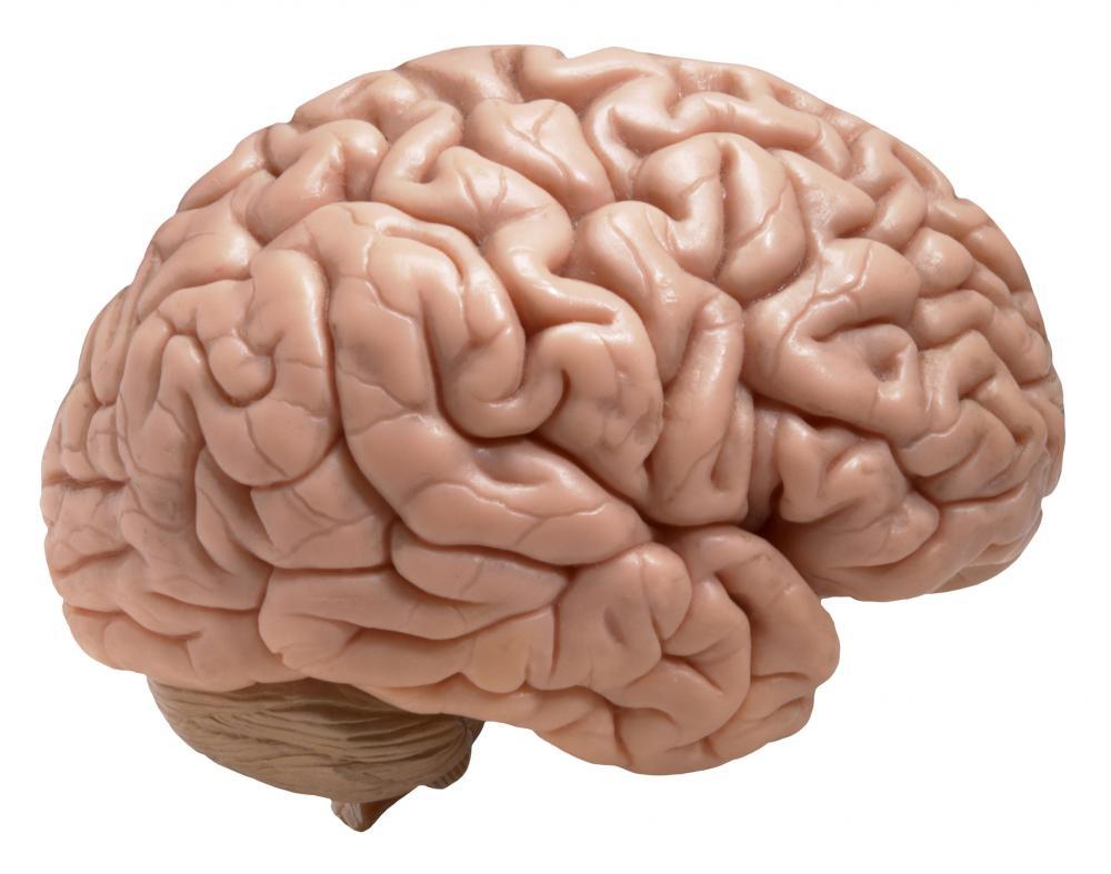 Healthy-Brain-Daily-Health-Tip-daily1healthtip4all.jpg