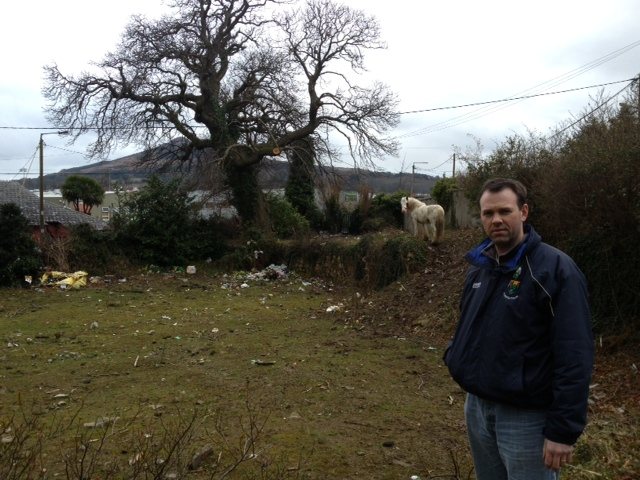 John brady 230 stray horses disposed of in wicklow since for House hits 88