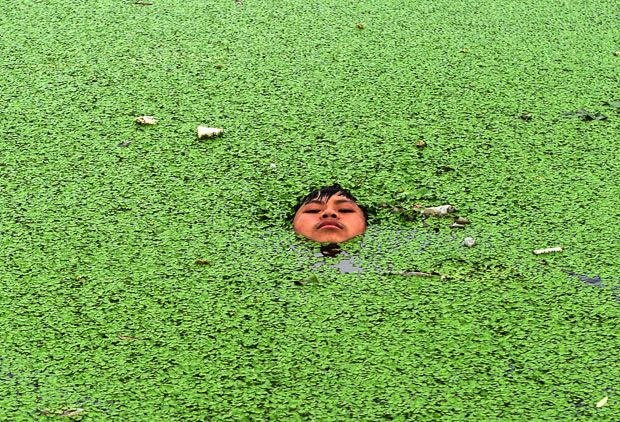 Duckweed  Eat The Weeds and other things too