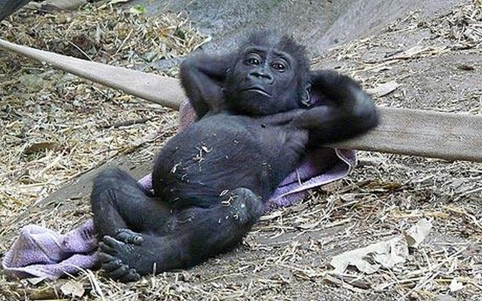 Image result for chilled out animals