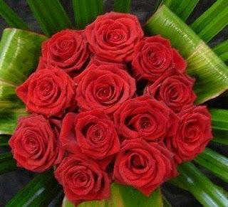 Fotos de Rosas Rojas, parte 1
