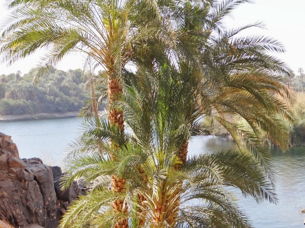 Ogród botaniczny w Asuanie