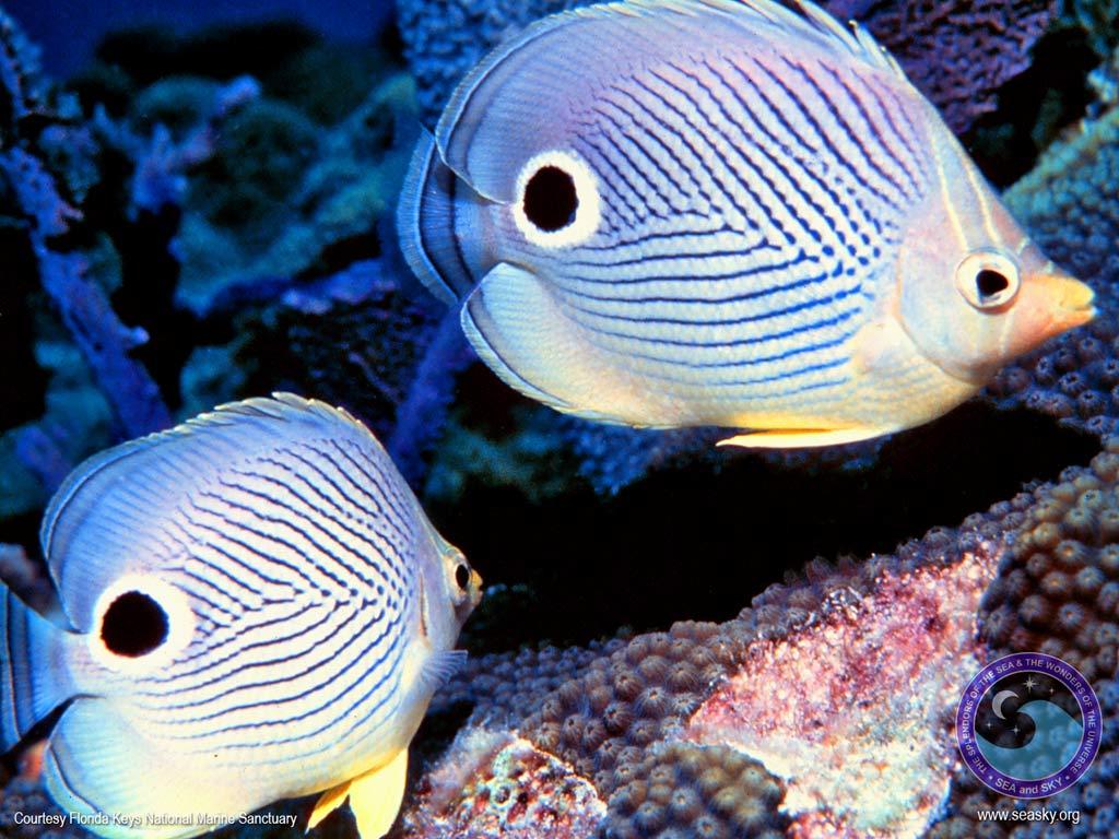 Bravo wallpaper fish wallpaper pack 1 1024x768 for Do fish make noise