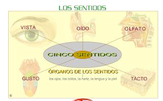 http://www.gobiernodecanarias.org/educacion/3/WebC/eltanque/lossentidos/organosdelossentidos_p.html