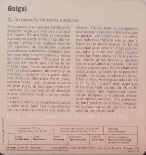 Blog Safari club, características del Guiguí, es un pequeño fantasma nocturno
