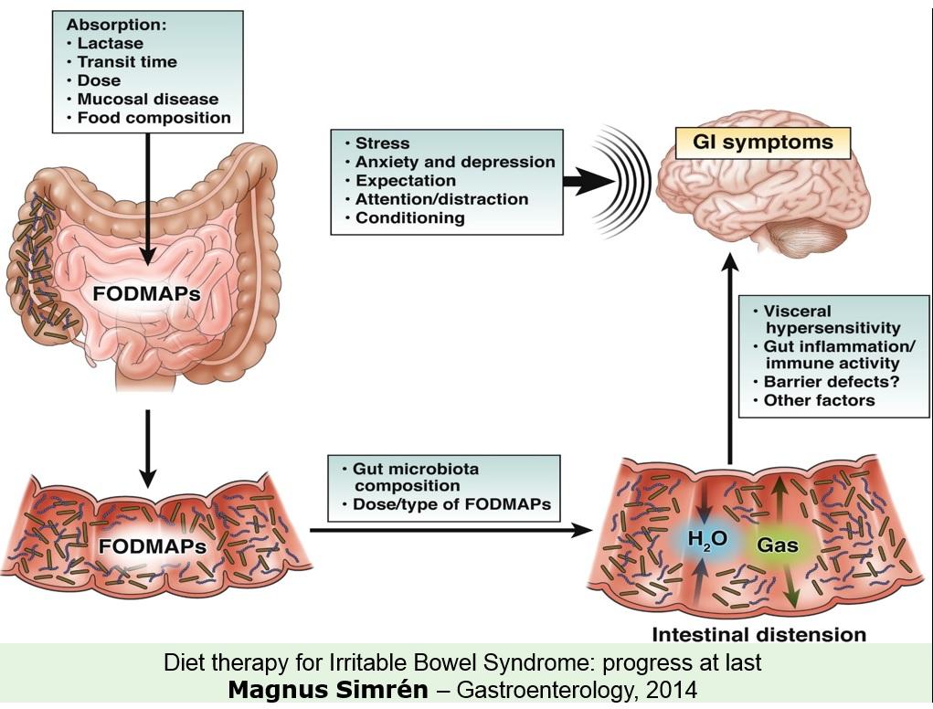 stress transit intestinal