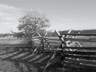 Gettysburg fence rows