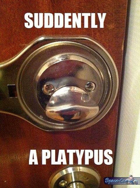 funny things platypus picture