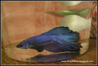 Delta Tail Betta Fish