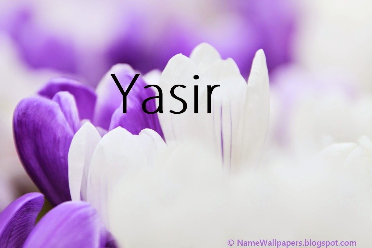 Yasir Name Wallpapers Yasir Name Wallpaper Urdu Name Meaning Name