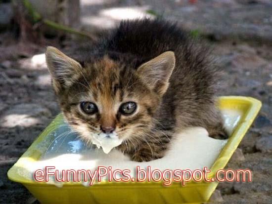 Baby Kitten with Milk Mustache