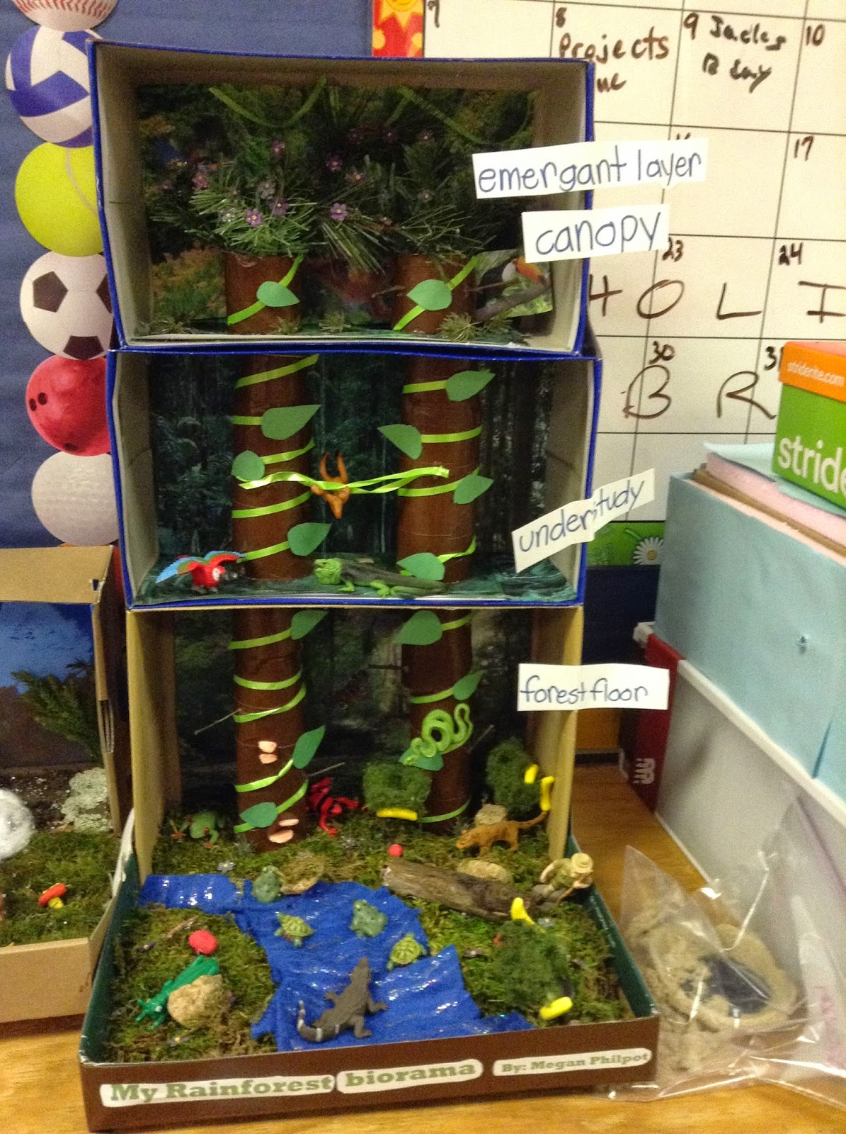 The cougars roar this diorama of the tropical rain forest biome was made by megan philpot she used real moss for the moss megan also used more than one shoe box for the sciox Image collections