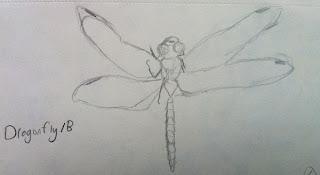 Dragonfly Sketch - Sketchbook - Grant Museum of Zoology Field Trip London - Arts Award Bronze Level Art Portfolio Ideas