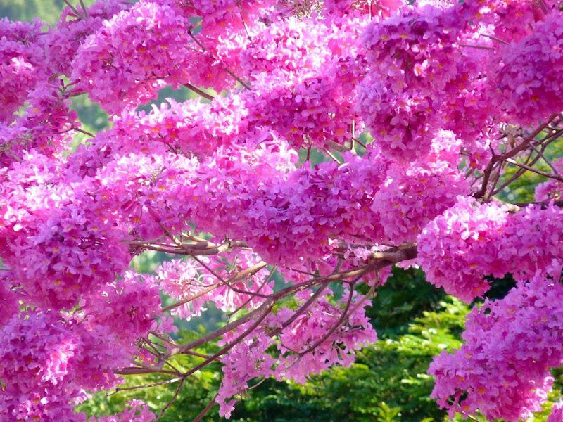 Jual Wallpaper Bunga Sakura Pexels
