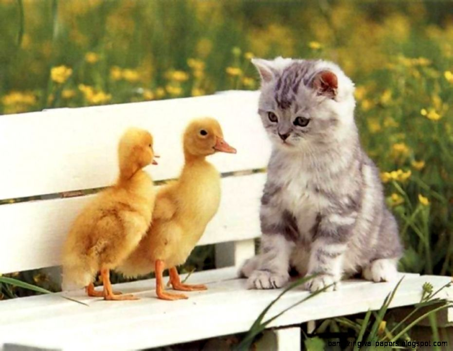 Desktop cute baby images of animals