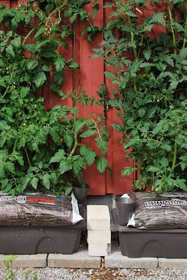 Muonamiehen mökki - Kasvusäkkiviljelyä ja altakastelualtaat